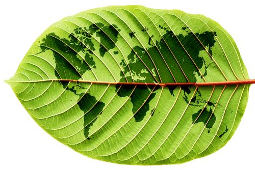 Por que as empresas preferem neutralizar a reduzir o dano ambiental?